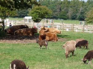Homestead Livestock