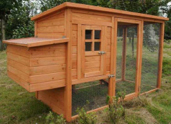 Medium Size Chicken Coop