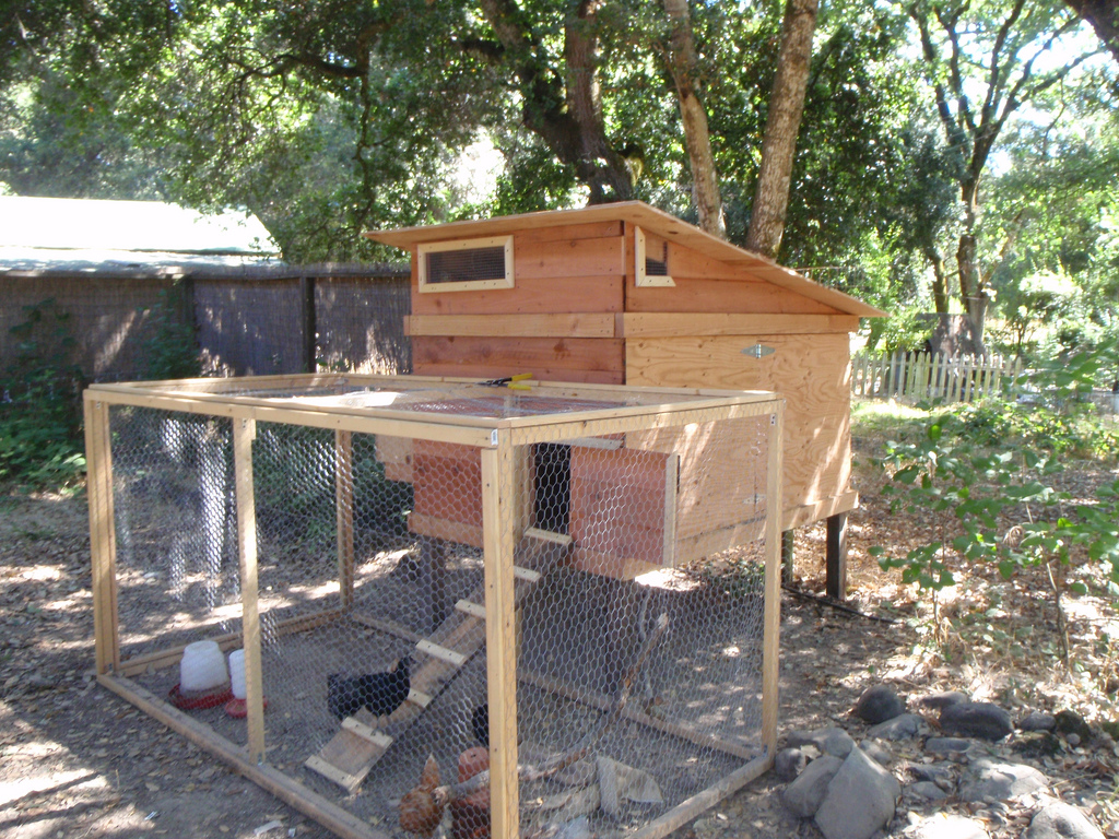 Chicken Coops The Top 5 Requirements